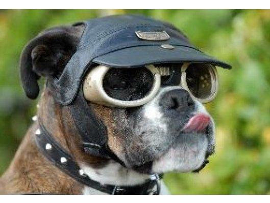 Gafas de sol - Tienda de animales La Gloria