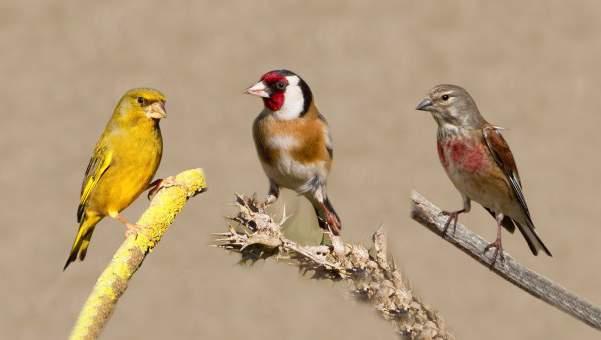 Imagen de Pájaros domésticos