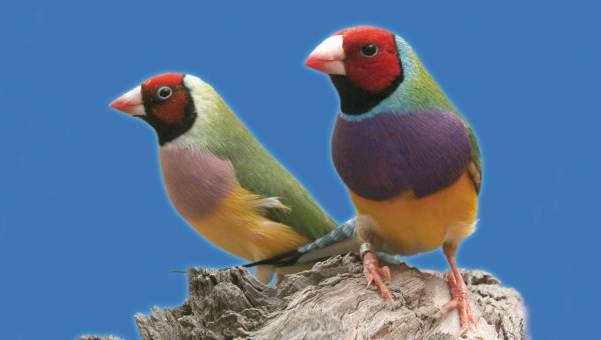 Imagen de Aves exóticas