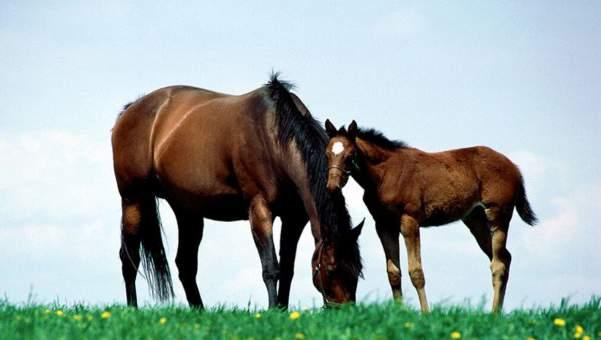 Imagen de Especialistas en equitación