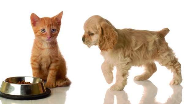 Imagen de Gatos y perritos