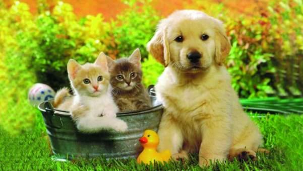 Imagen de Gatitos y perritos